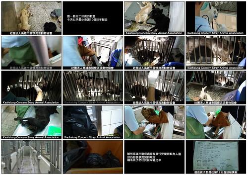 「資訊」2011年高雄動保處安樂死作業紀錄,將動物棄養到收容所,牠們就會得到政府照顧而獲得幸福?20111009