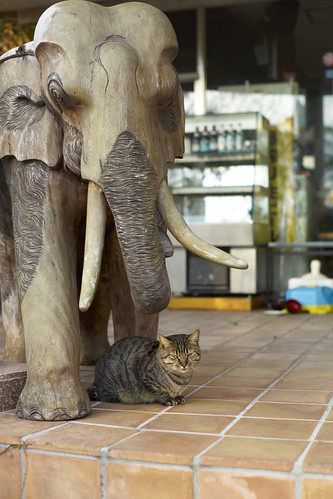elephant and cat