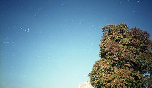 tree brockwell 2
