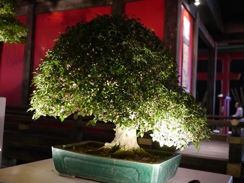 Foire Internationale de Montpellier - Espace Japon - 2011-10-07- P1260608