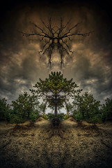 The Rapture (Frank C. Grace (Trig Photography)) Tags: autumn trees sky tree art fall face clouds forest ma rocks faces artistic pentax earth massachusetts hill roots newengland horns manipulation spooky dirt demon mirrored hdr rapture k5 wwh fallriver freetown slipping photomatix stateforest tonemapped assonet slippingaway demonicface pentaxart blinkagain trigphotography frankcgrace