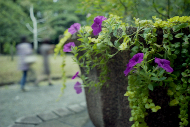 洋館の花鉢