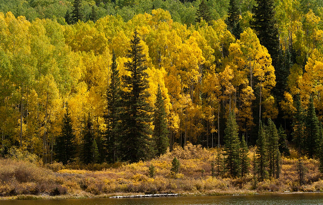 Autumn Forest on Woods Lake