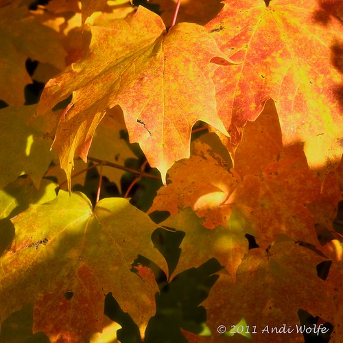 Autumn color 365/365 by andiwolfe