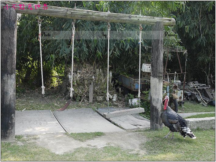 新港頂菜園 (34).JPG