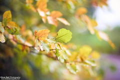 Autumn is coming... (Olivia L'Estrange-Bell) Tags: autumn autumnleaves englishcountryside autumnsun canoneos5dmarkii oliviabell oliviabellphotography