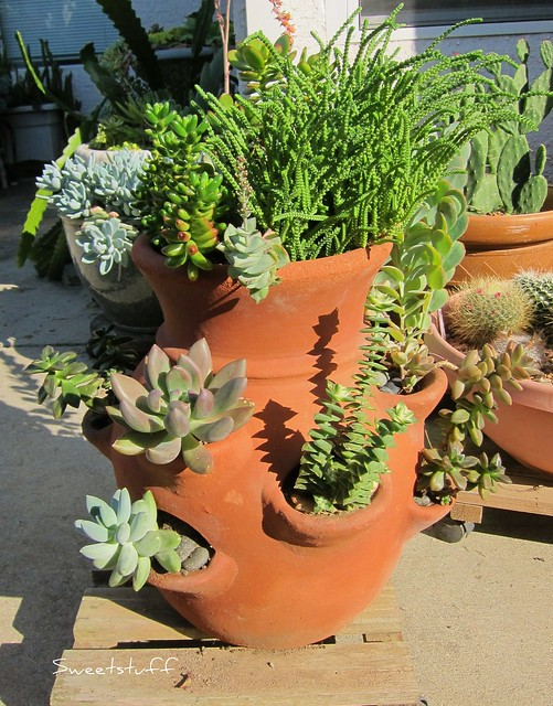 Favorite view of Succulent flower pot