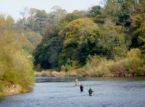 Fly Fishing on River Tyne