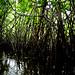 Mangroves-6
