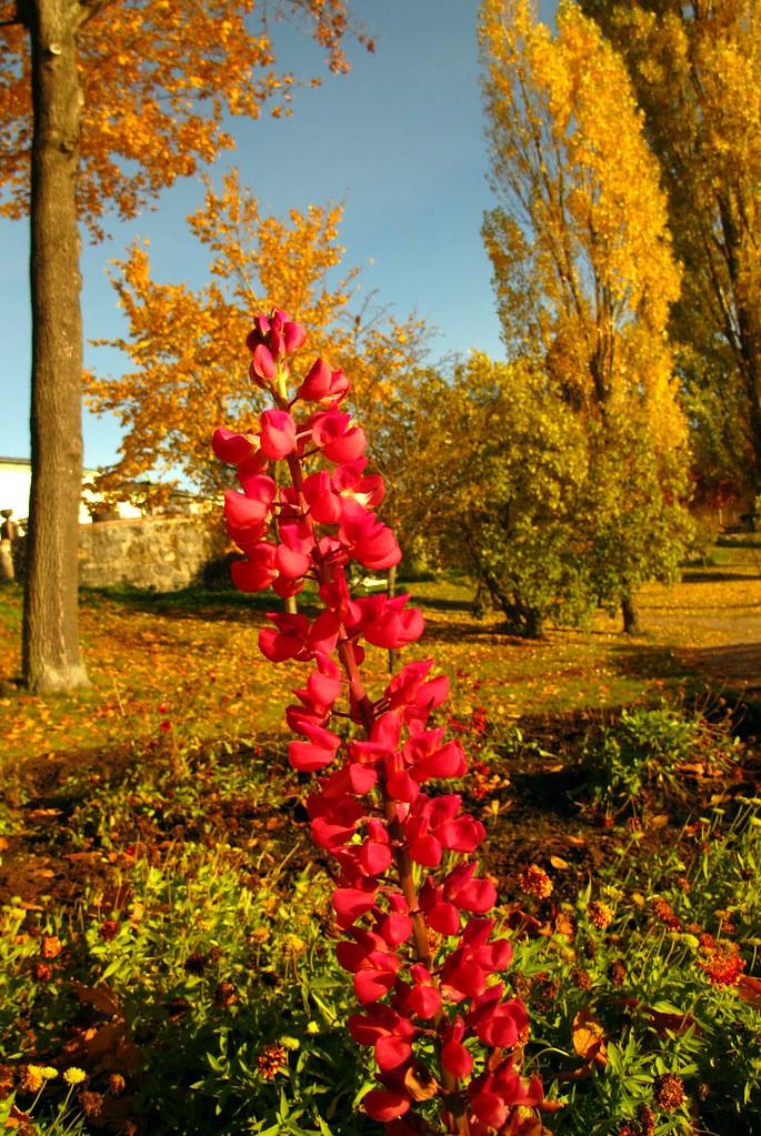 mötesplatsen blommor långedrag öppettider Örebro