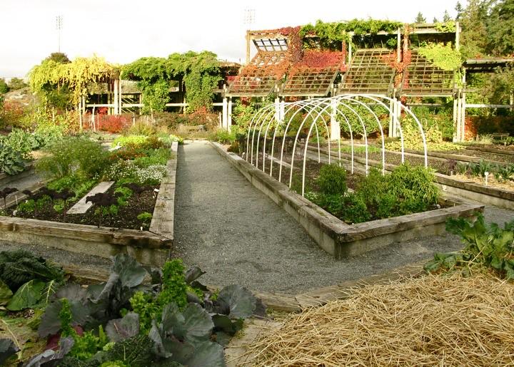 ubc botanical garden 017
