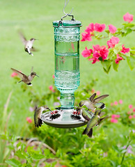Hummingbirds on the Bottle Feeder