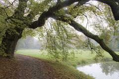 Prhonice (Joaqun Mart) Tags: lake tree grass fog praha unesco pruhonice