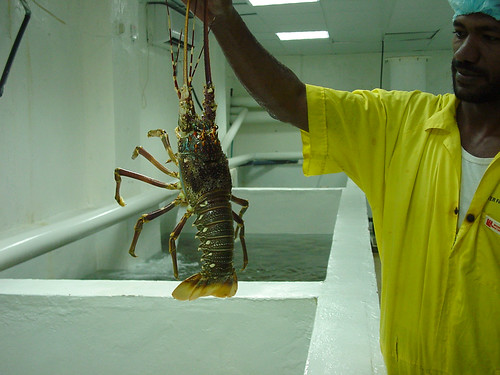 Lobster trader, Malaysia. Photo by Fred Weirowsky, 2007