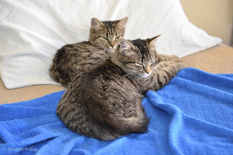 Tabby kittens on bed
