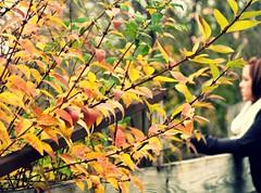 Three Hundred Forty Three. (alibubba) Tags: bridge autumn portrait music fall leaves self bokeh song michigan annarbor wildflowers 365 tompetty lyric galluppark musicallychallenged youbelongsomewhereyoufeelfree alikeh