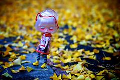 Sleepy Yellow Autumn