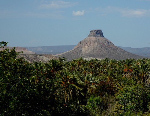 Volcanic plug, volcano cone, palms, dry branches, desert, La Purisima / San Isidro, West Coastal, Baja California Sur, Mexico by Wonderlane