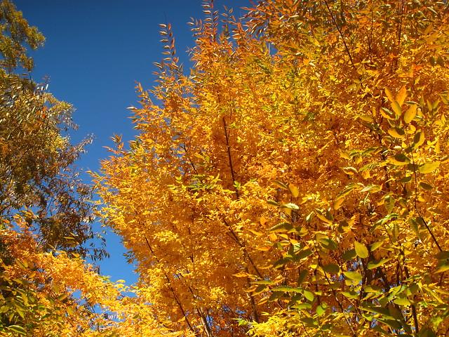 2011 | Fall