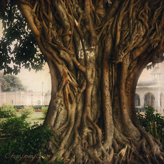 The tree ... (CheyneySan (Marie)) Tags: india tree nature delhi creative trunk redfort rockpaper