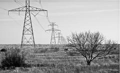 Power Lines WestTexas.12 (mcreedonmcvean) Tags: winter vanishingpoint texas powerlines drought