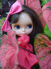 Hiding amongst the Caladiums!!