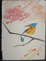 kingfisher notebook