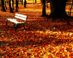 The Beauty of Autumn (Paula ) Tags: park autumn trees leaves forest bench alley woods autumnleaves autumncolors romania baiamare maramures