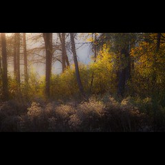 Thtre d'automne...!!! (Denis Collette...!!!) Tags: autumn mist lake fall automne bravo lac brume img6987 idream notredamedemontauban deniscollette lacducastor mkinac saariysqualitypictures fleursetpaysages lelitedespaysages