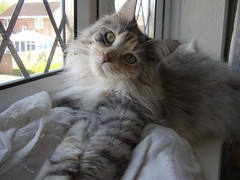 "Tatty-Tilly does ""cute"" so well (Healthypetsuk) Tags: winners nov8 112011"