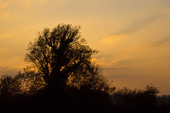 TREE SILHOUETTE AT DUSK (jdoakey) Tags: uk greatbritain autumn trees light sunset england sky orange plants cloud plant colour detail tree reed beautiful up silhouette yellow night clouds woodland reeds landscape golden bush pretty branch colours view britain dusk gorgeous branches sony great norfolk scenic meadow calm clear hedge stunning norwich land trunk fields british marsh unusual lovely alpha dslr favourite incredible fen atmospheric oakley clearsky highaltitude reedbed strumpshaw a55 lightrails strumpshawfen flickraward dslt flickraward sonya55 theinspirationgroup
