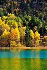 Yellow, Blue and Green (nawapa) Tags: china travel autumn lake flower color tree landscape ancient view five scenic valley fallen sichuan jiuzhaigou 2011 nanping nawapa