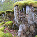 Moss and Icicles on Buck Mountain. Photo: Stuart Delman, Chestertown NY.