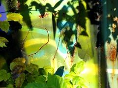 2011-11-21 Eden VI (OM) ([ henning ]) Tags: street light shadow plant streetart green art abandoned yellow canon graffiti rust decay bahnhof powershot container om wuppertal autumnal henning turqoise g11 2011 mirke mhlinghaus mirker muehlinghaus
