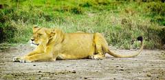 "PhotoFly Travel Club Kenya Safari 2011! • <a style=""font-size:0.8em;"" href=""http://www.flickr.com/photos/56154910@N05/5892408055/"" target=""_blank"">View on Flickr</a>"