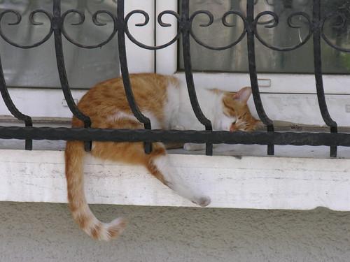 Ha ügyesek vagyunk, ezen a képen találunk egy alvó macskát