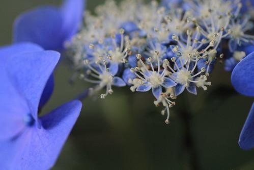 青の世界_5666