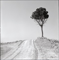 . (_Alexei) Tags: road bw italy white black tree 120 6x6 film blanco nature analog square landscape italia y kodak negro pole d76 hasselblad negative crete scanned lone sw medium format mf 100 manual toscana simple schwartz weiss developed minimalistic f28 yf planar 80mm 500cm tmx 100tmx senesi autaut mucigliani