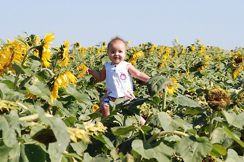 Annmarie in sunflowers