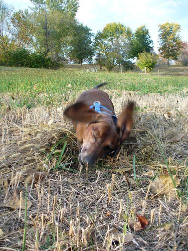 2011-10-09 - Ralphie's (pre-) Birthday Dig - 0014