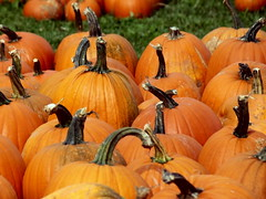 Pick a Pumpkin (Jemsabell) Tags: autumn pumpkins choice canadianthanksgiving theannapolisvalley