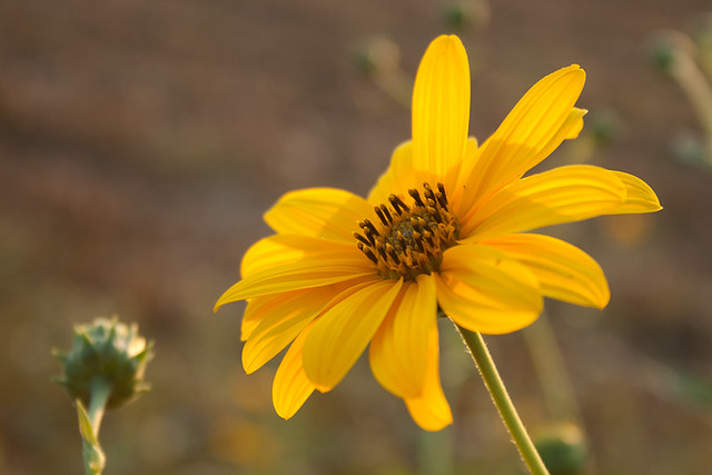 _yellow