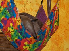 Ori sleeping in the baby hammock