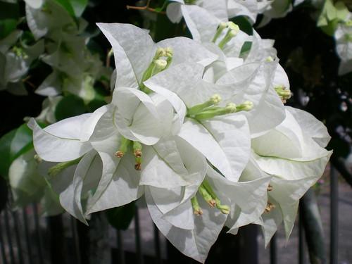 Bunga kertas 2