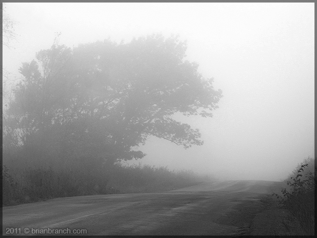 P1190558_tree_in_fog