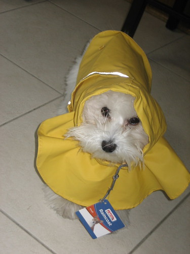 Toby's new raincoat