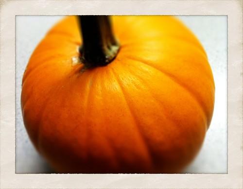 [290/365] Pumpkin by goaliej54