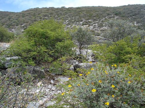 Variedad de arbustos