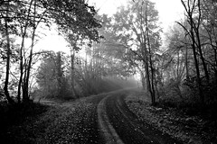 B&W Pathway (karstenphoto) Tags: road new york autumn light bw sunlight white black fall leaves canon lost dawn path upstate dirt american ethereal pastoral sunray t1i