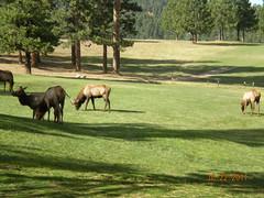 oct 198 (apehog) Tags: lake colorado evergreen elk